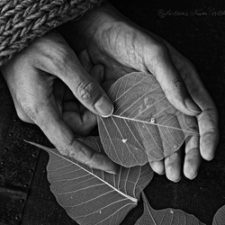 Hands of an Autumn Soul