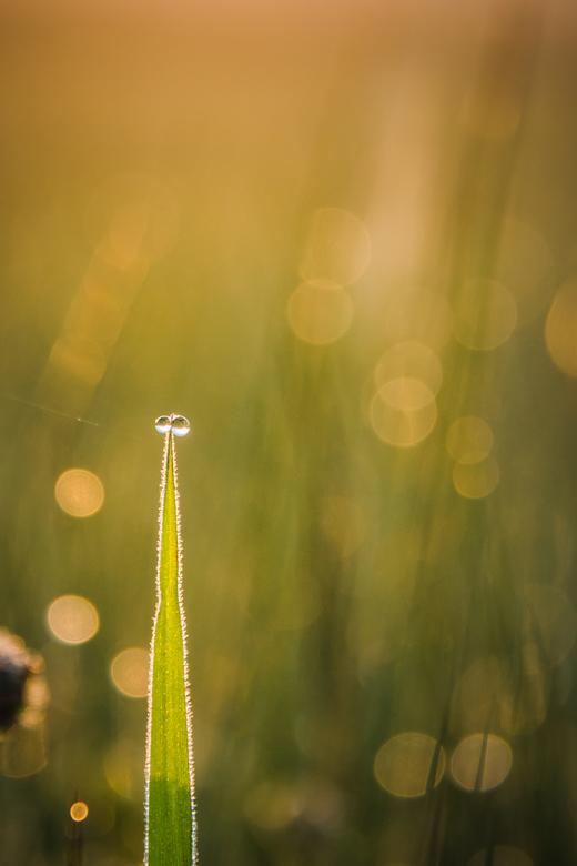 Eenvoud of toch tweevoud - Vroeg in de ochtend als de dauw nog op de velden staat