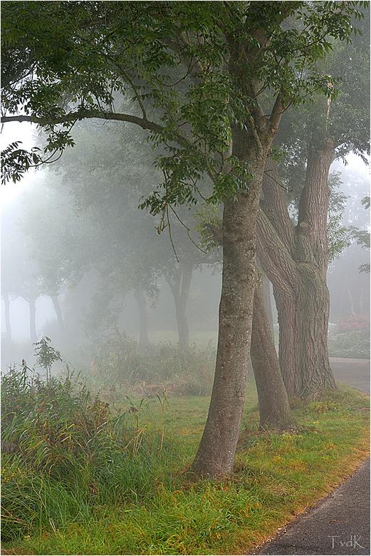 Mistig - Mistige ochtend waarbij bomen vaak een dankbaar onderwerp zijn.