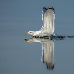 Landing op het water.
