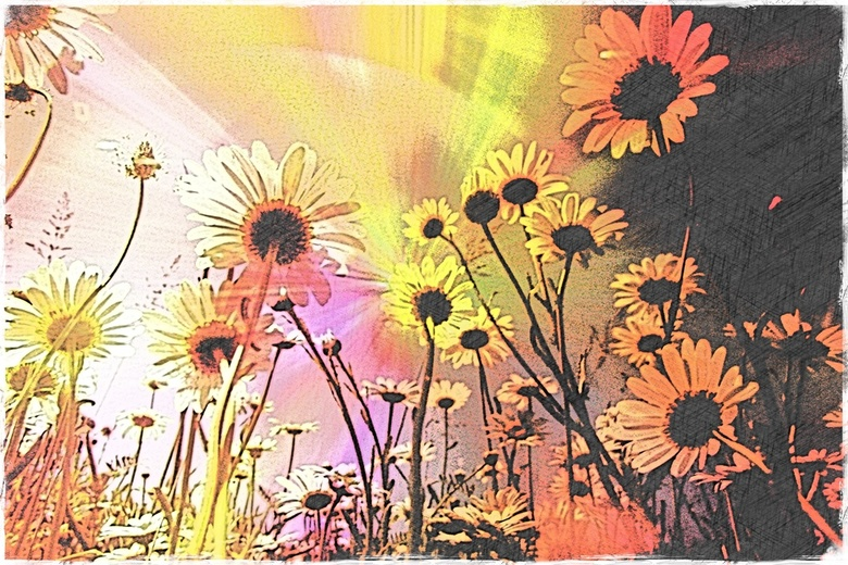 Flowers in the sun...