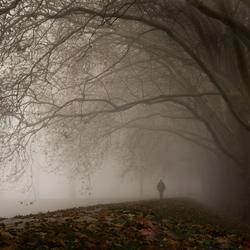 Onder de trieste bomen