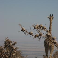 Bye bye Serengeti