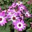 P1480227 Kopie Pink Ribbon  tuincentr ockenburg 25 mrt 2018