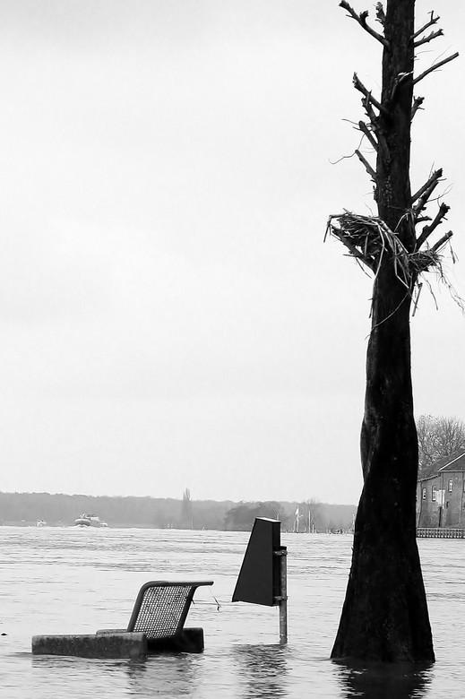 Met de voetjes in het water.. - Uitzicht in de Maas, over de Maas... Hoog in de boom de hoogste waterstand te zien...