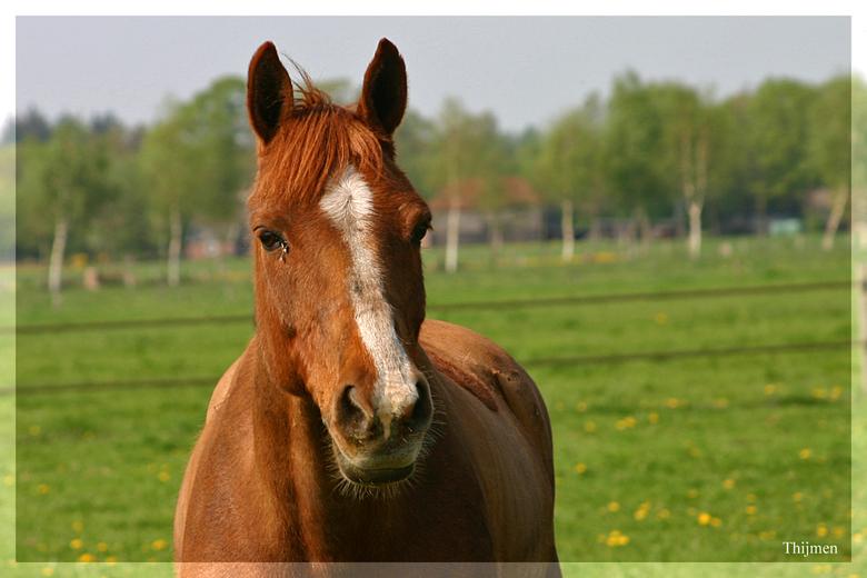 paard - mooie kleur he dit paard
