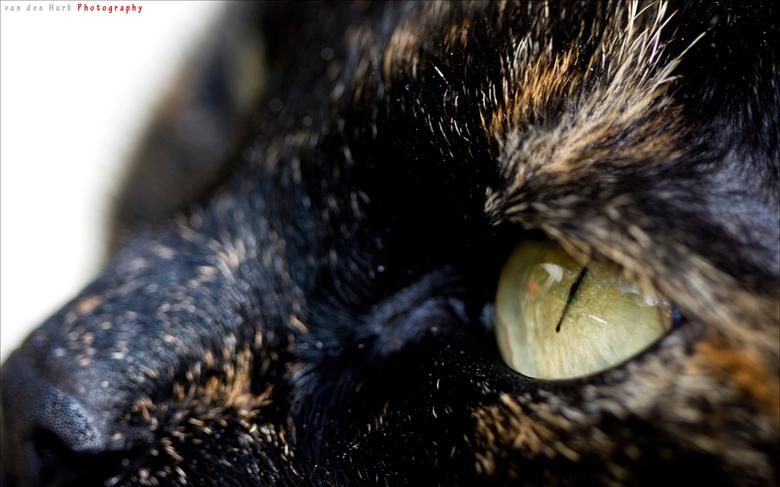 Eye Of The Tiger - Dit is mijn kat, Tabby, of Tabitha voluit.<br /> Ze is een poes van bijna 6 jaar oud en snel als de wind. Altijd alert en o zo lie