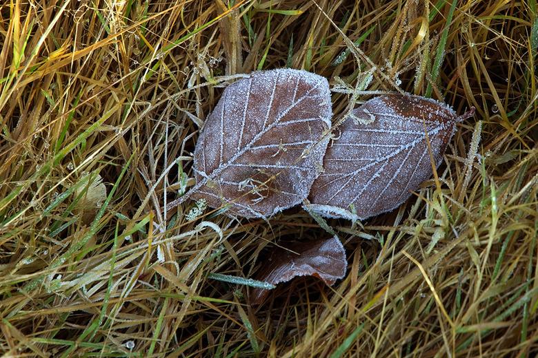Frost - gezien in het gras.
