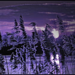 the colour of purple ...