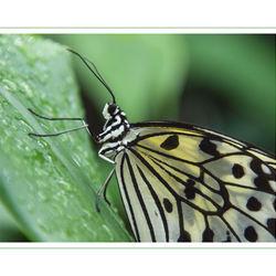 Vlinders aan de vliet 1
