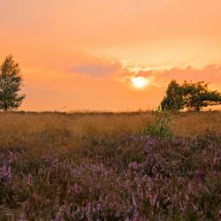 De Gouden Heide!