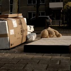 Een beer op reis