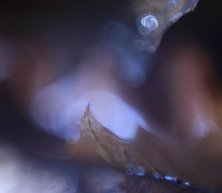 Inspired by Loulou - Gemaakt tijdens een workshop-masterclass bij Loulou Beavers…<br /> herfstblaadjes, plantenspuit, lampje, WB 3500.... met Helios-