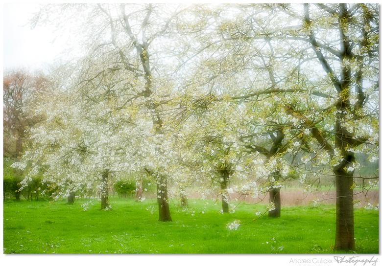 Blossom moods - Als eerste bedankt voor jullie leuke en verschillende reacties op mijn vorige upload.<br /> Vorig jaar heb ik wat met dubbele belicht