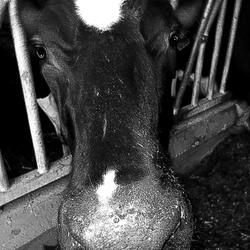 Waar komt onze melk vandaan?