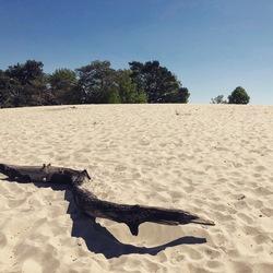 Zand en bomen een mooie combinatie