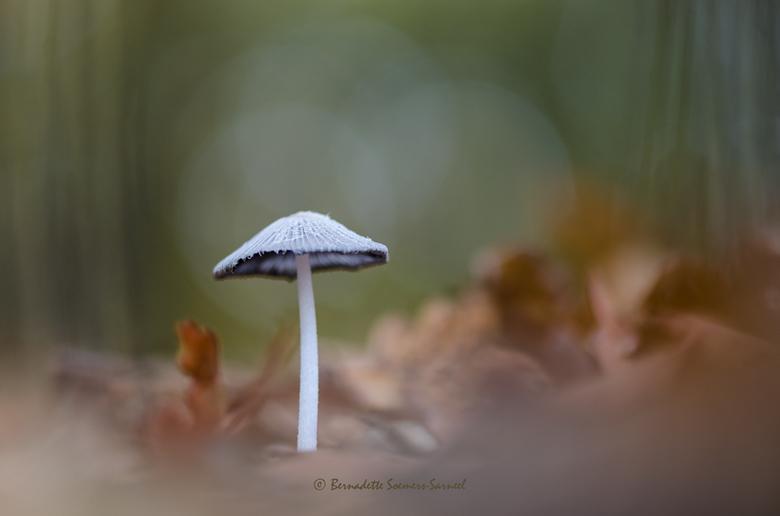 Herfst in het eikenbos - Soms hoef je niet ver te gaan om een mooi onderwerp te vinden. Dit hazenpootje zag ik afgelopen week staan toen ik naar mijn