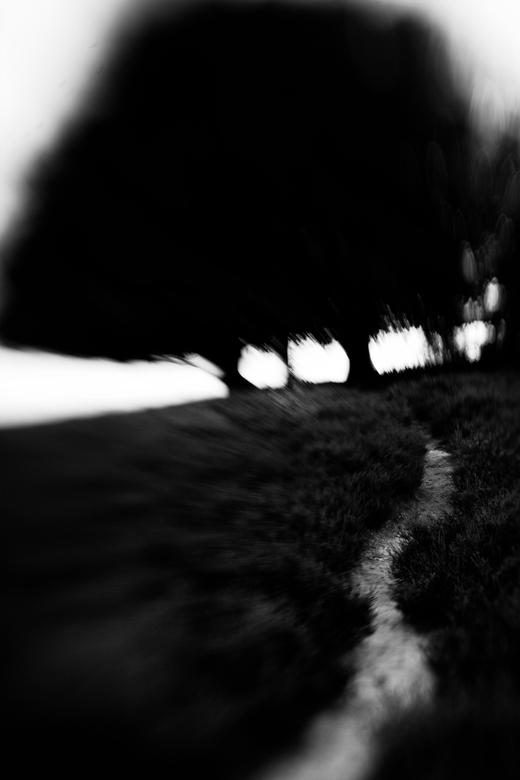 dare to follow me there? - Een pad over de heide, verderop een groepje bomen. Gemaakt met een lensbaby composer op een ff camera. Omgezet naar zwart w