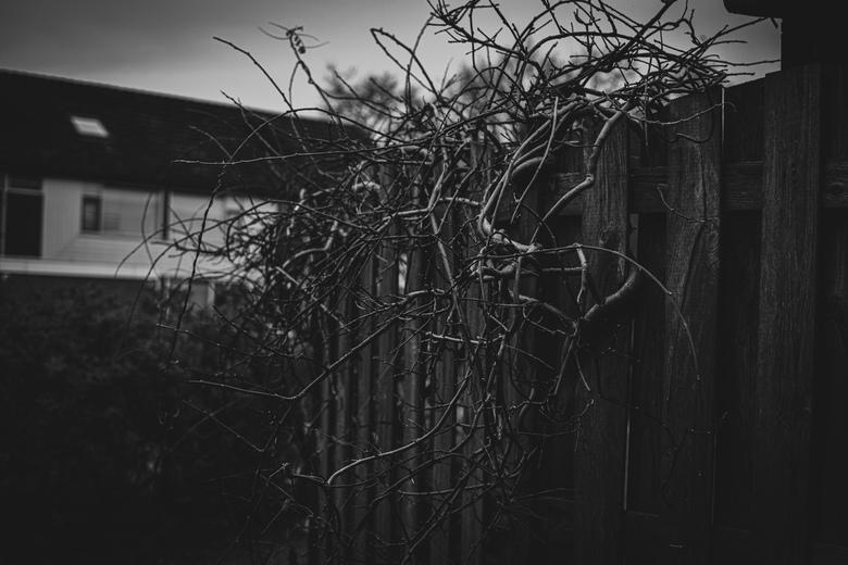 Omgeving fotografie Leusden -