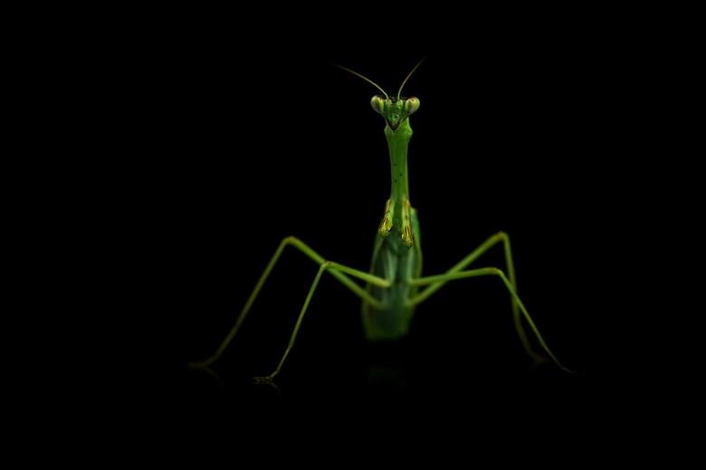 knalgroen - deze meneer knalt bijna fluoriserend groen van het scherm ..wat zijn het toch een bijzondere diertjes