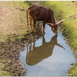 drinken of spiegelen?