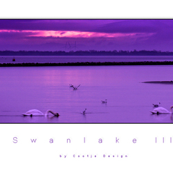 Swanlake 3