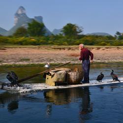 Aalscholver visser.