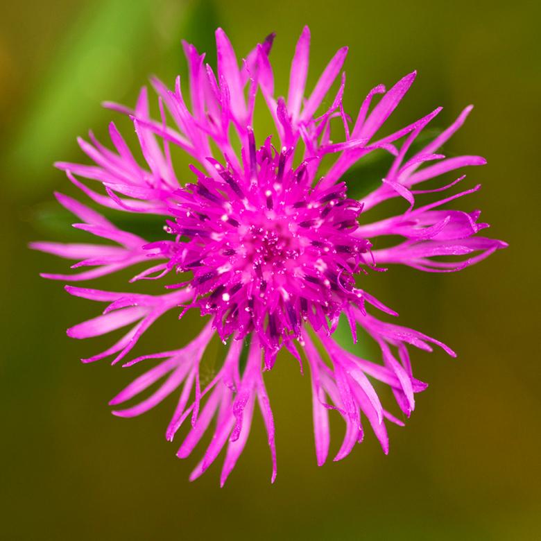 bloem.jpg - bloem.jpg