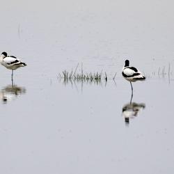 Kluten in het Lauwersmeergebied