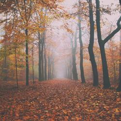 Mistige herfstkleuren