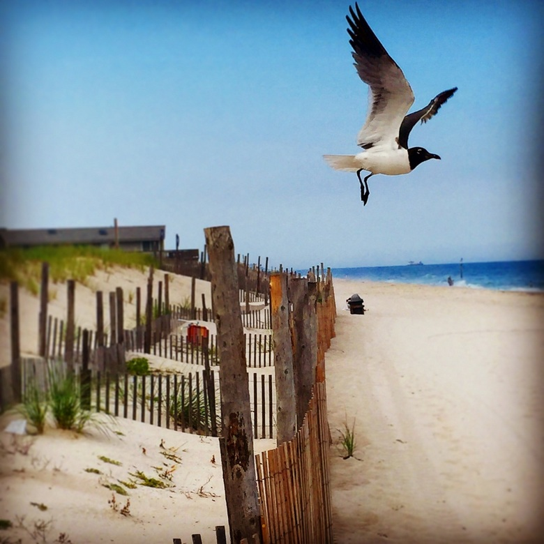 Long Beach Island -
