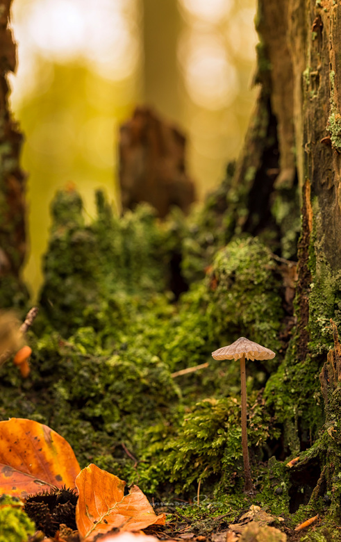 Mooie kleine wereld - een prachtige kleine wereld, als je maar op je knieën gaat zitten