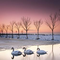 winteravondlicht