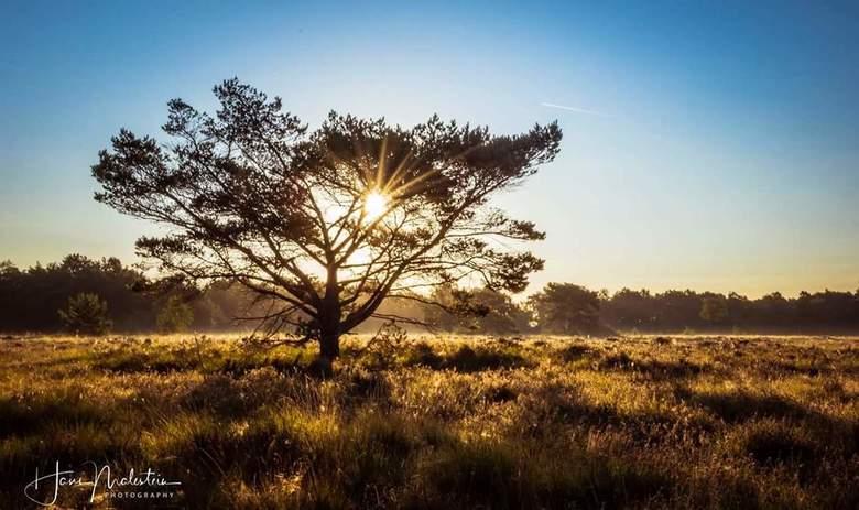 Zonsopkomst Paradijs bos Barneveld - Zonsopkomst Paradijs bos Barneveld<br />