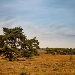 Brunsummer Heide in de herfst
