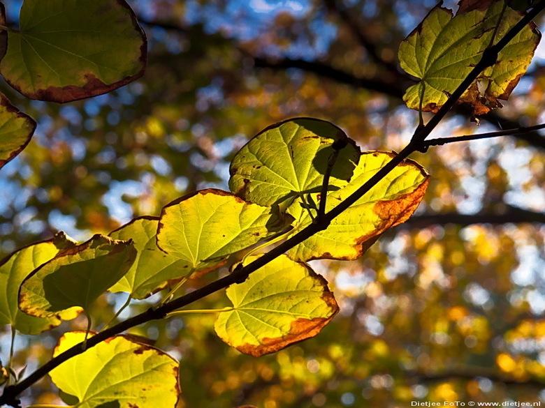 herfstblad - herfstkleuren