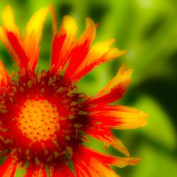 Een space bloem