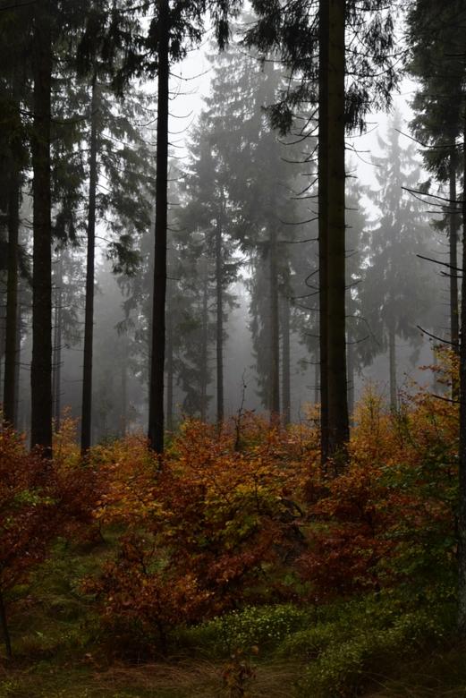 Herfst - Herfst in Hildfeld in de buurt van Winterberg, Duitsland.<br /> Ondanks, mistig, regenachtig weer buiten de mooie omgeving supermacht om te