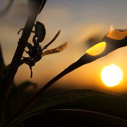 wesp tijdens zonsopkomst