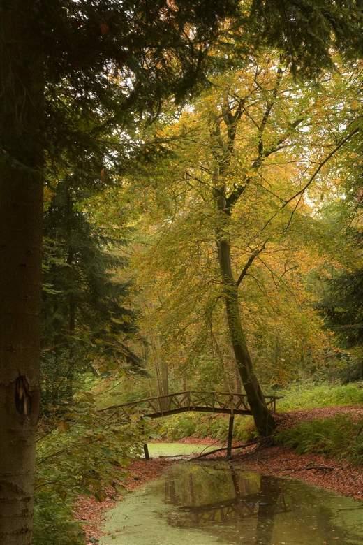Sprookjesachtig - Sprookjesachtig in het bos