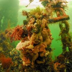 Oud gemaal onder water