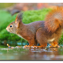 squirrel on Ice!