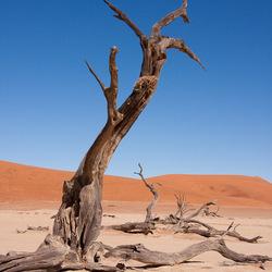 Dead tree, Deadvlei