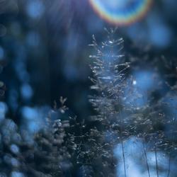 Kus van licht