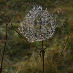 Web-bloem.....