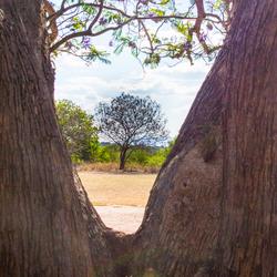 Boom in een boom