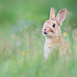 Dag reddend konijn