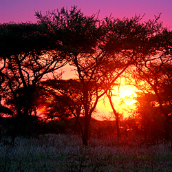 Zonsondergang in Kenia