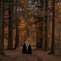 Fantasy Forest2