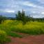 Lente nabij Zafra